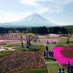 2016富士芝桜まつり入園料・駐車料金など最新情報
