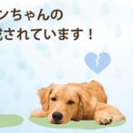 【ペットの贅沢水素水】楽天・Amazon価格比較!《ワンちゃんの多くの悩みを内側からケアする》