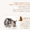 キャットフード【ジャガー】楽天・Amazon価格比較購入!《動物性タンパク質80%以上で作られたプレミアムキャットフード》